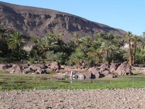 Oasis et désert marocain